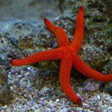 starfish mallorca